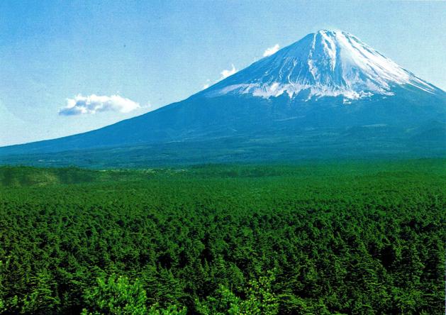 Regarde autour de toi. Aokigahara. Une immense mer d'arbres grouillante de vie et d'une beauté indescriptible. Mais qui pue la charogne ironiquement, il y a plus de suicides ici qu'en n'importe quel endroit au monde.»