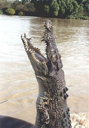 Une bête pas vilaine… © Pinnacle Source : Wikipedia https://fr.wikipedia.org/wiki/Crocodile_(film,_2000)