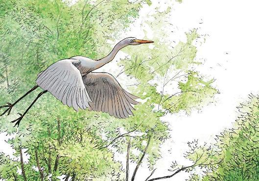 Free as a bird © JC Servais / Aire Libre